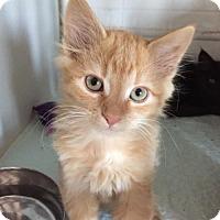 Adopt A Pet :: Dutch - Erwin, TN