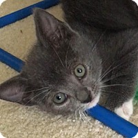 Adopt A Pet :: August - Hampton, VA