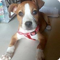 Adopt A Pet :: Thelma - Adoption Pending - Hillsboro, IL