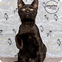 Adopt A Pet :: Boz - Cincinnati, OH