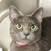 Adopt A Pet :: PURRIM - Las Vegas, NV