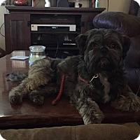 Adopt A Pet :: Oscar - Torrington, WY