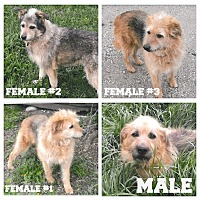 Terrier (Unknown Type, Medium) Mix Dog for adoption in Valley City, North Dakota - Unnamed Dogs(Courtesy Listing)
