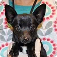 Adopt A Pet :: Connie - Wildomar, CA
