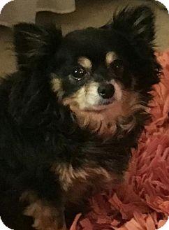 Terrier (Unknown Type, Medium) Mix Dog for adoption in Alpharetta, Georgia - Wallie