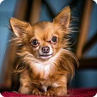 Adopt A Pet :: Lil Man D3394 - Shakopee, MN