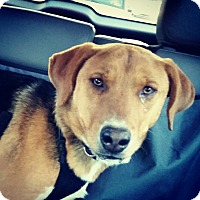 Adopt A Pet :: Axel - Media, PA
