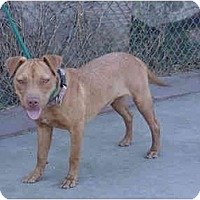 Adopt A Pet :: Hannah - West Los Angeles, CA