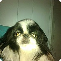 Adopt A Pet :: Belinda - Cumberland, MD