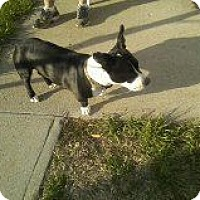 Adopt A Pet :: Dooby - Alliance, NE