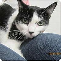 Adopt A Pet :: Jade - Sterling Hgts, MI