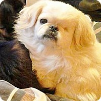 Adopt A Pet :: Toby (KY foster) - Vansant, VA