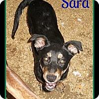 Adopt A Pet :: Sara - Plano, TX