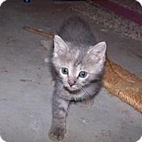 Adopt A Pet :: Peachy - Xenia, OH