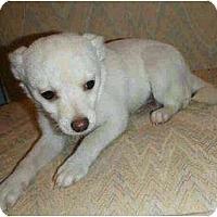 Adopt A Pet :: Carlitos AKA Charlie - Inglewood, CA