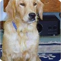 Adopt A Pet :: Tulip/Heidi - Denver, CO