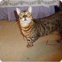 Adopt A Pet :: Artemis - Lantana, FL