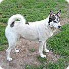 Adopt A Pet :: Jack