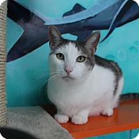 Adopt A Pet :: Luke - Newport Beach, CA