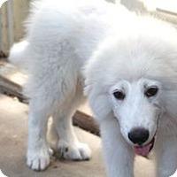 Adopt A Pet :: Mobley - Meet Him!! - Norwalk, CT