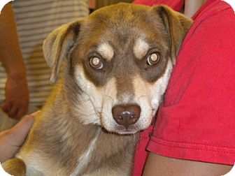 Terrier (Unknown Type, Medium) Mix Dog for adoption in Fresno, California - Roger