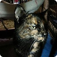Adopt A Pet :: Maple - Trevose, PA
