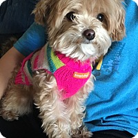 Adopt A Pet :: Molly - Fairview Heights, IL