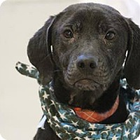 Adopt A Pet :: Lana - Lebanon, CT