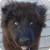 Adopt A Pet :: Tanko - MINNEAPOLIS, KS