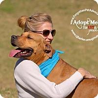 Adopt A Pet :: Fargo - Pearland, TX