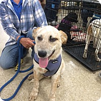 Adopt A Pet :: Freckles - Hohenwald, TN