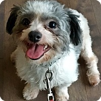 Adopt A Pet :: Blaze - Toronto, ON