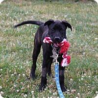 Adopt A Pet :: Douglas - Elyria, OH