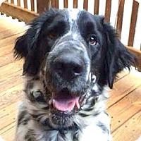 Adopt A Pet :: TUBBS aka Mr. T - Pine Grove, PA