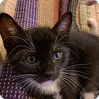 Adopt A Pet :: Miles - Brooklyn, NY