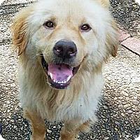 Adopt A Pet :: Chance - BIRMINGHAM, AL