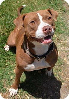 Pit Bull Terrier Mix Dog for adoption in Ridgeland, South Carolina - Baby Girl