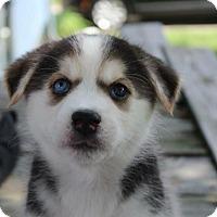 Adopt A Pet :: Ariel - Grand Rapids, MI