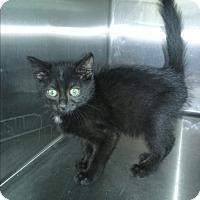 Adopt A Pet :: Duncan - Olivet, MI
