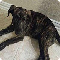 Adopt A Pet :: A410626 - San Antonio, TX