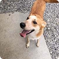Adopt A Pet :: Mary Rose - Westminster, MD