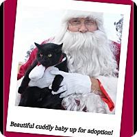 Adopt A Pet :: Krissy - Barnegat, NJ