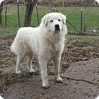 Adopt A Pet :: Ramsey - Newport, KY
