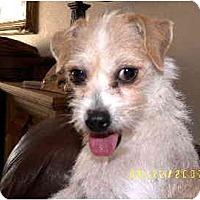 Adopt A Pet :: FiFi - Scottsdale, AZ