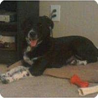Adopt A Pet :: Sofie - Phoenix, AZ