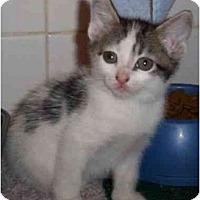 Adopt A Pet :: Brandy - Reston, VA