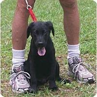 Adopt A Pet :: SHANE - Little River, SC