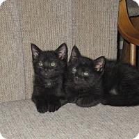 Adopt A Pet :: Buzzy & Bixby - Arlington, VA