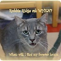 Adopt A Pet :: Robbie Ridge - Trevose, PA