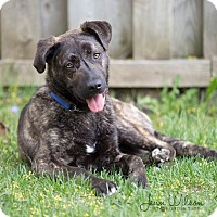 Adopt A Pet :: Hudson - Drumbo, ON